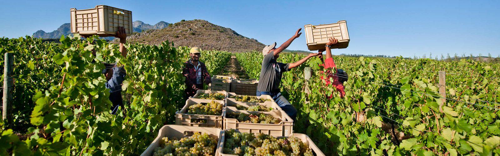 多姿多彩白诗南:卢瓦尔河谷 VS 南非