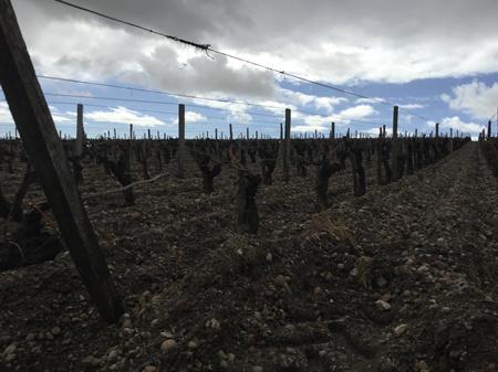 葡萄酒文化:更亲民、更随心
