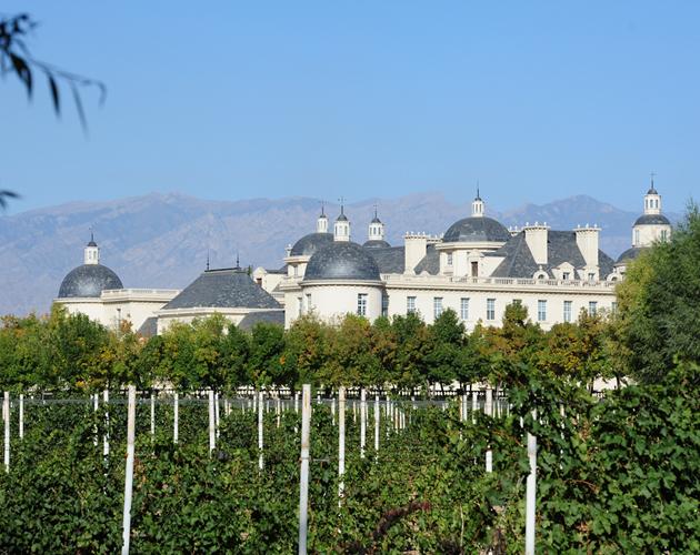 中国主要酿酒葡萄品种大盘点