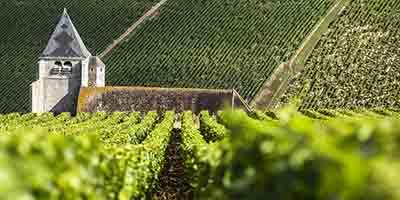 艳阳下的勃艮第——记录2015年份勃艮第白葡萄酒