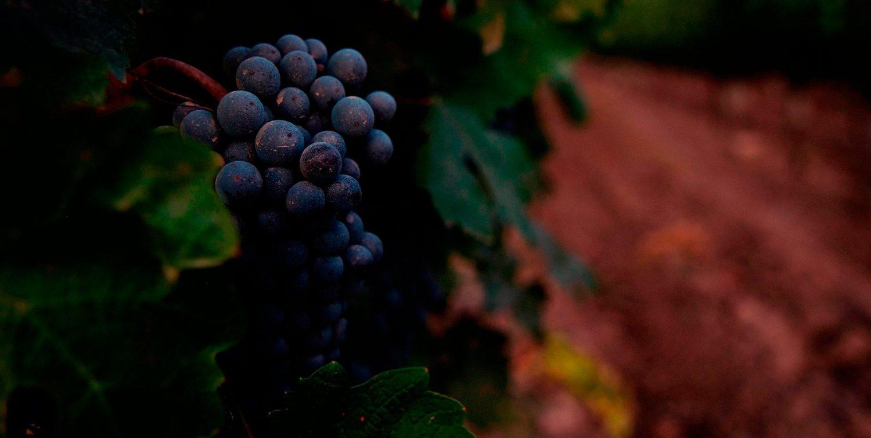 查德威克酒庄:智利第一款满分酒缔造者